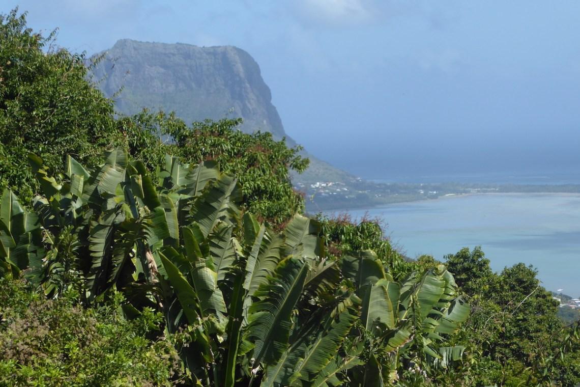 mauritius palmen meer | aufmerksam reisen