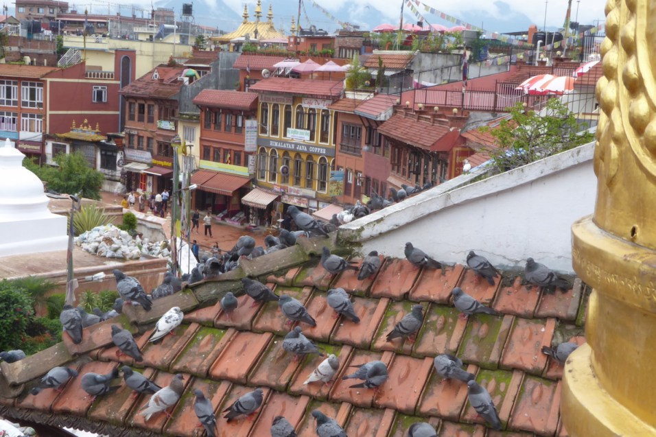 kathmandu_tauben_dach