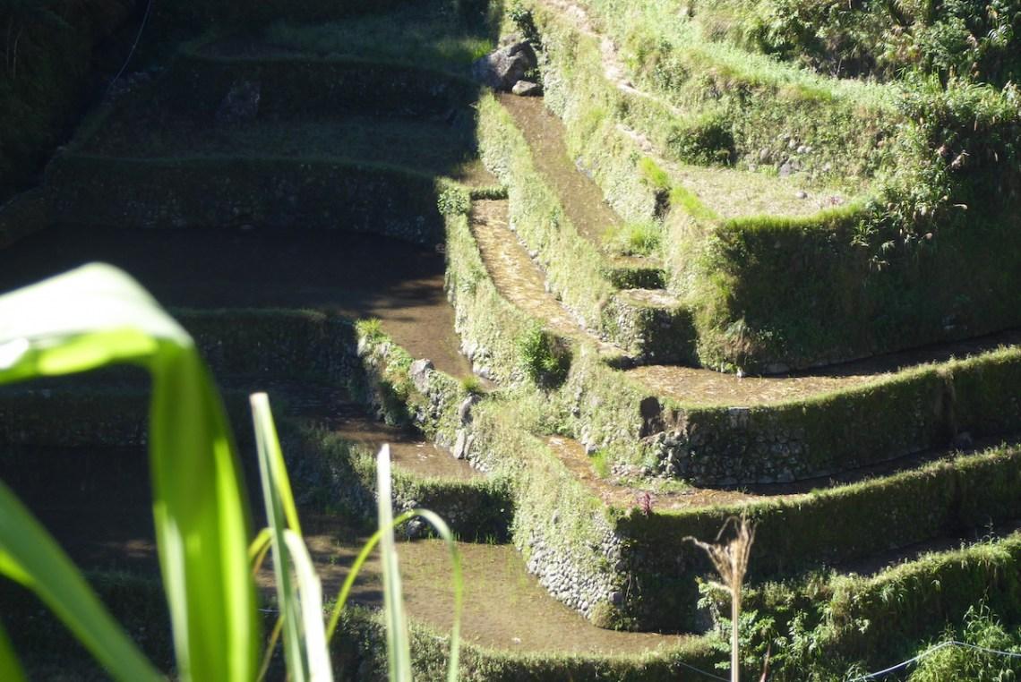 """Die Reisterrassen von Banaue auf den Philippinen werden auch """"Stufen zum Himmel"""" genannt."""