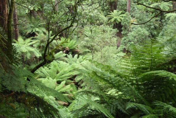 Australien-YarraValley-Farne