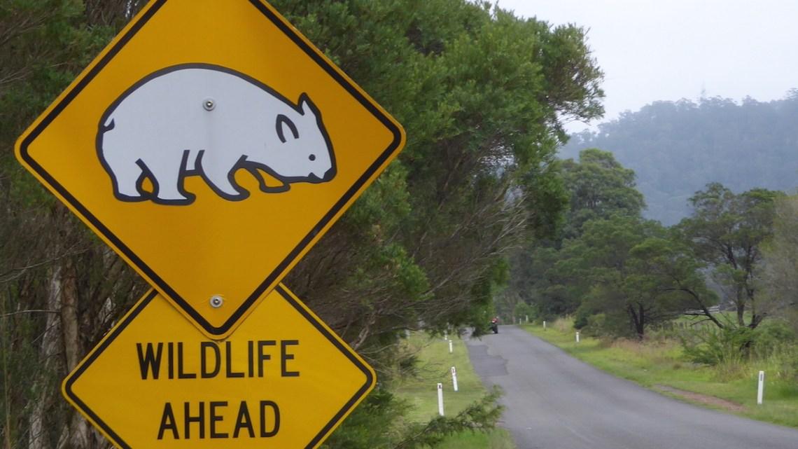 Australien Tierleben Wombat Schild wildlife Slider | aufmerksam reisen