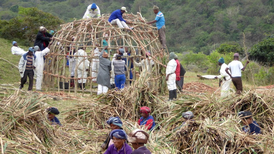 Männer und Frauen der Xhosa beim Bau einer rituellen Hütte in Bulungula in Südafrika