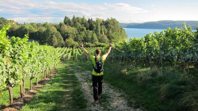 Wanderweg Seegang: kurz vor Überlingen