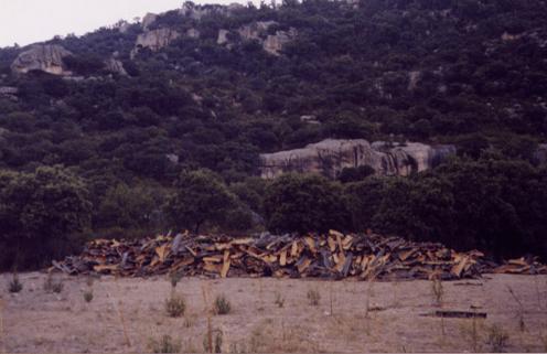 alcornocal Sierra Hoyo de Manzanares