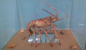 """Continúa exposición """"Del agua a la muestra"""" en museo de ciencias naturales de la capital mexiquense"""