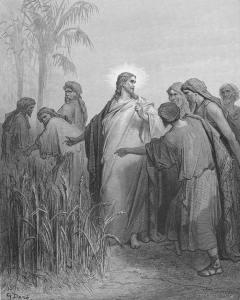 Les épis du sabbat (Mc 2,23-28)
