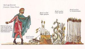 Le semeur généreux (Mc 4,3-20)
