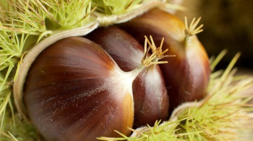 栗子能治肾虚、腰腿无力,它能够通肾益气,厚胃肠。