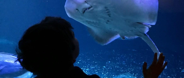 Activités pour enfant à Paris : l'aquarium du Trocadéro