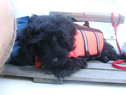 Poppy at 13 weeks sailing 3