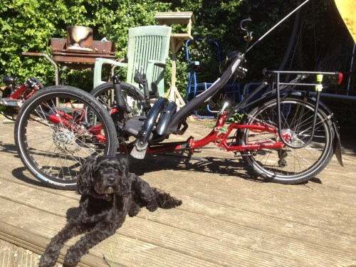 Dog unimpressed by my bike cleaning skills.