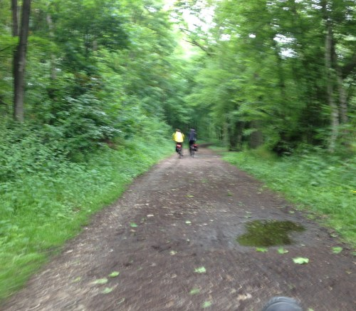 9 Fuzzy forest path