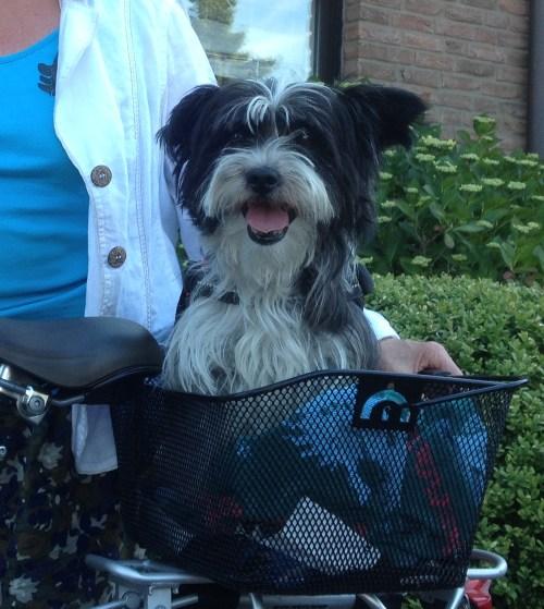 Dog in basket in Rahser 2