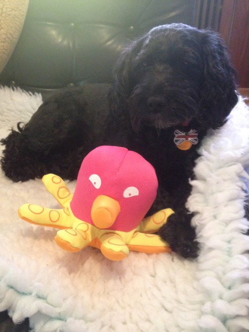 Poppy and Paul the Octopus