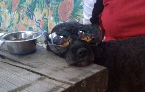 Cool Dog at Party