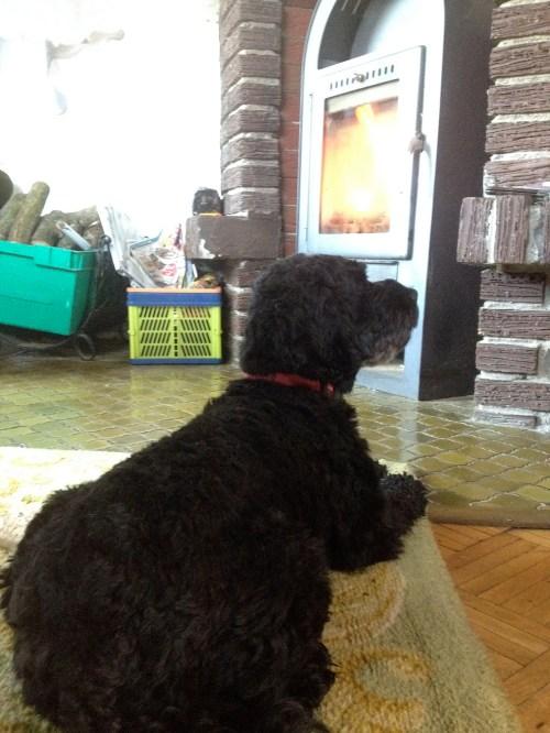 Dog enjoying woodburner