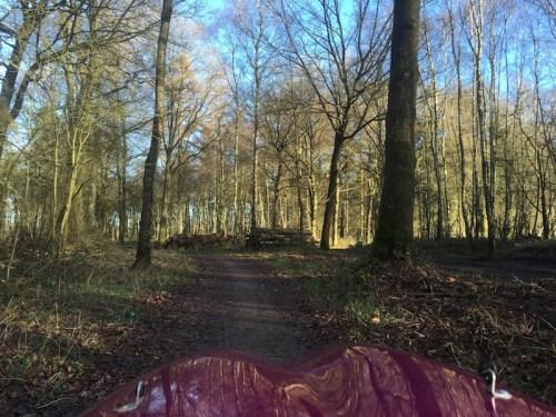 Woodland track 2
