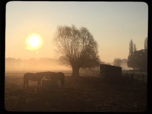 Misty morning with horses 2