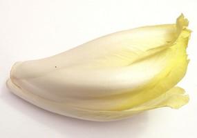 Les Chicons (les Endives) légumes au pays des ch'tis