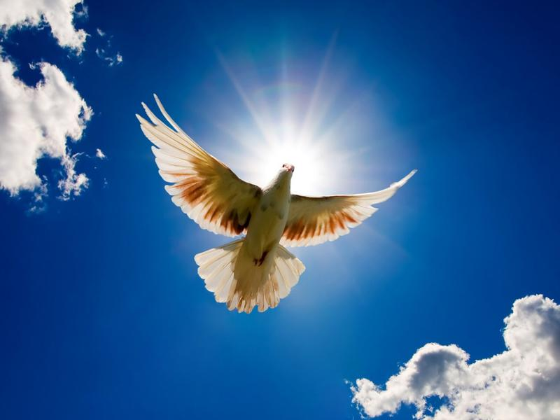 Image result for World Peace Day 17th November.-images.