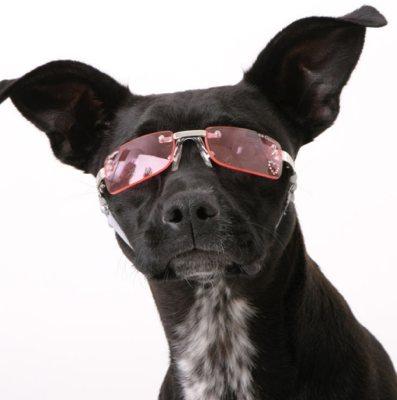 hundebrille-2