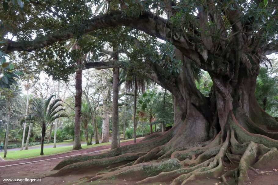 Jardim Botanico Antonio Borges