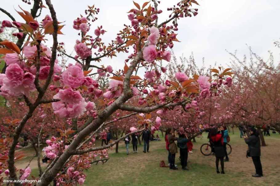 Herastrau Park Japanischer Garten Bukarest