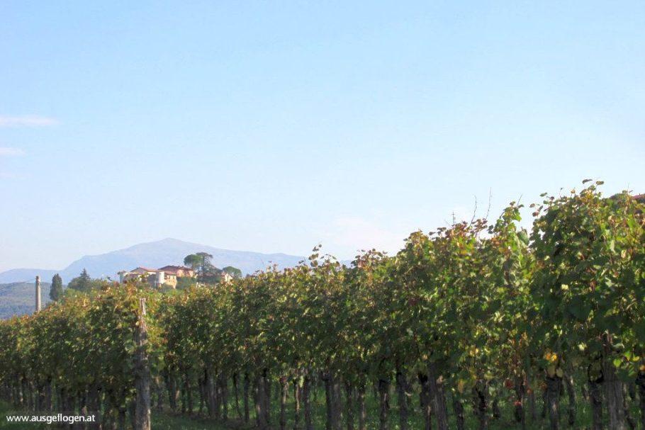 Wo im FRIAUL der Wein zu Hause ist: ein grenznaher Roadtrip