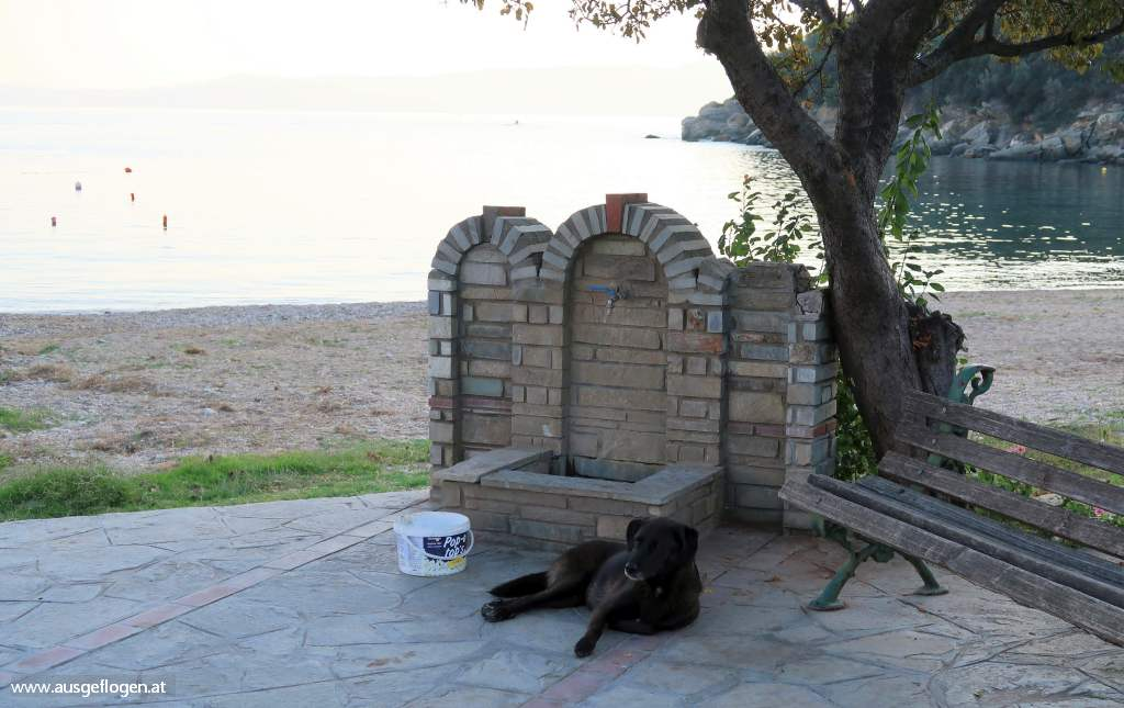 Griechenland streunde Hunde