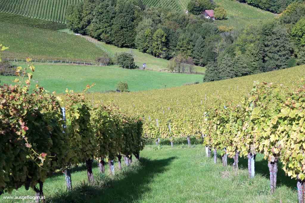 Ratsch an der Weinstraße Südsteiermark