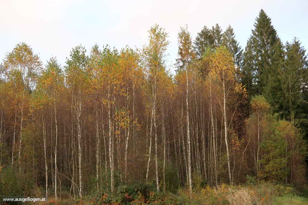 Hochmoor Schrems Ausflugsziel oberes Waldviertel