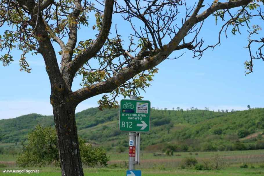 Kirschblütenradweg B12
