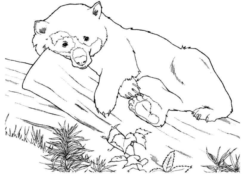 Ausmalbilder Tiere 16 Ausmalbilder Malvorlagen
