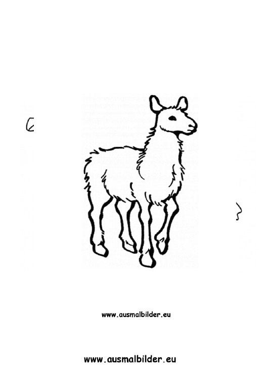 Ausmalbilder Alpaka Alpaka Malvorlagen