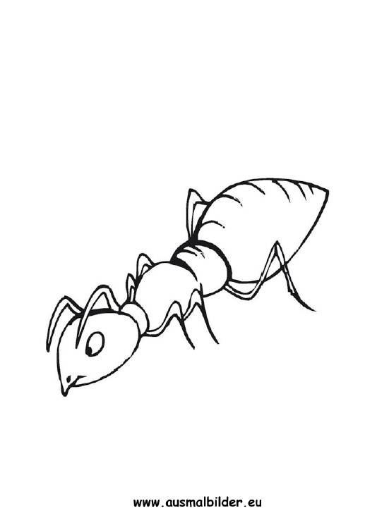 Ausmalbilder Ameise Ameisen Malvorlagen