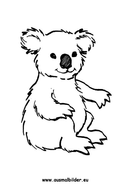 Ausmalbilder Koala Koalas Malvorlagen