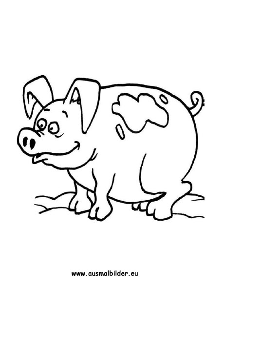 Ausmalbilder Schwein Schweine Malvorlagen