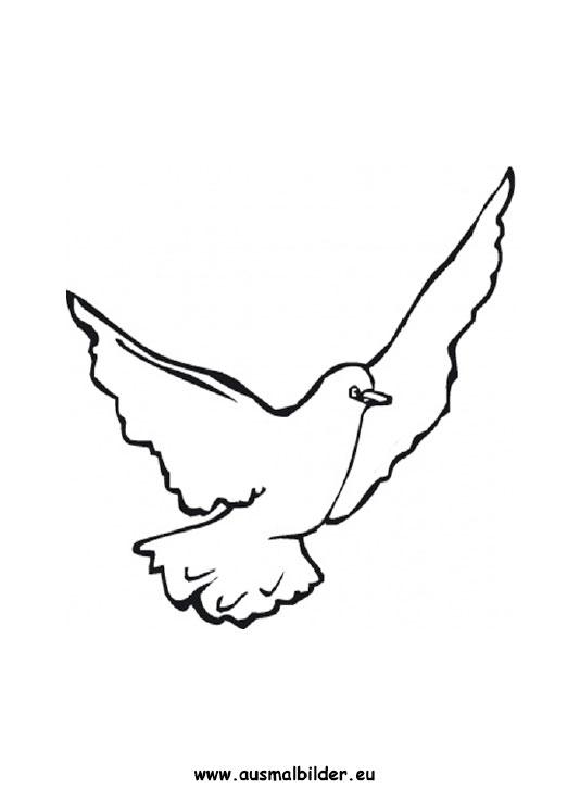 Ausmalbilder Taube Tauben Malvorlagen