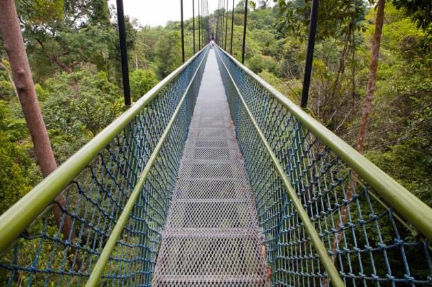 Treetop Walk Hängebrücke