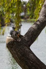 Vogel im Royal Botanic Garden