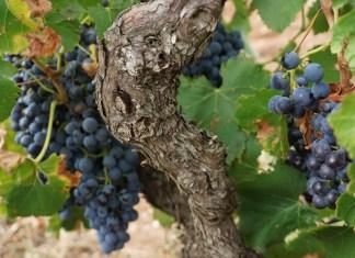 Best 15 Australian wines under $30 a bottle