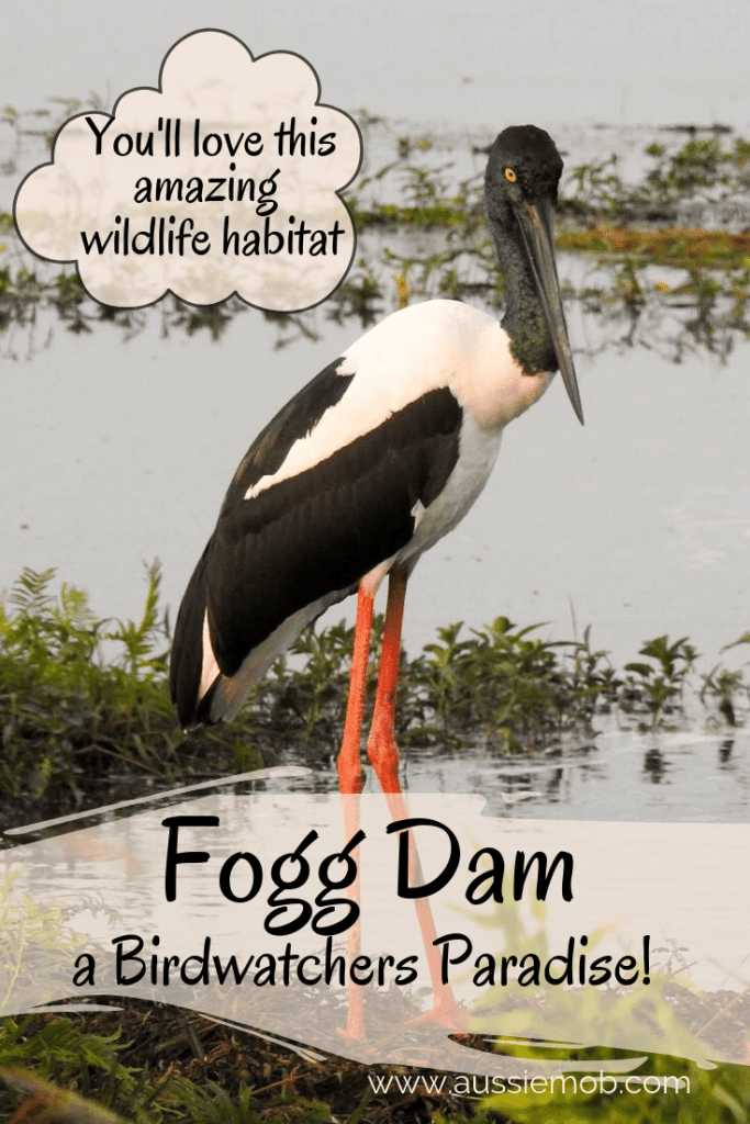 Fogg Dam