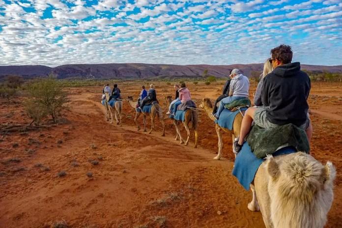 camel tour in Alice Springs