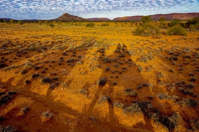 Camel Tour shadows