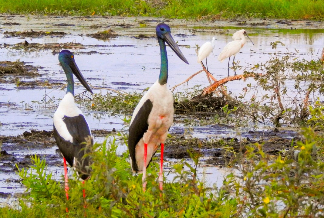Fogg Dam - a birdlovers' paradise
