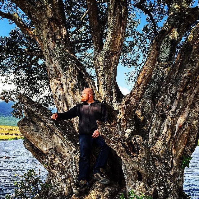 ngorongoro tree