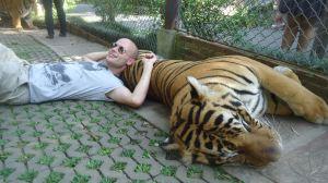 Man sleeping on a tiger