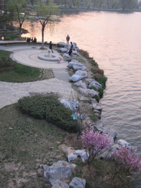 xuanwu lake cherry blossoms