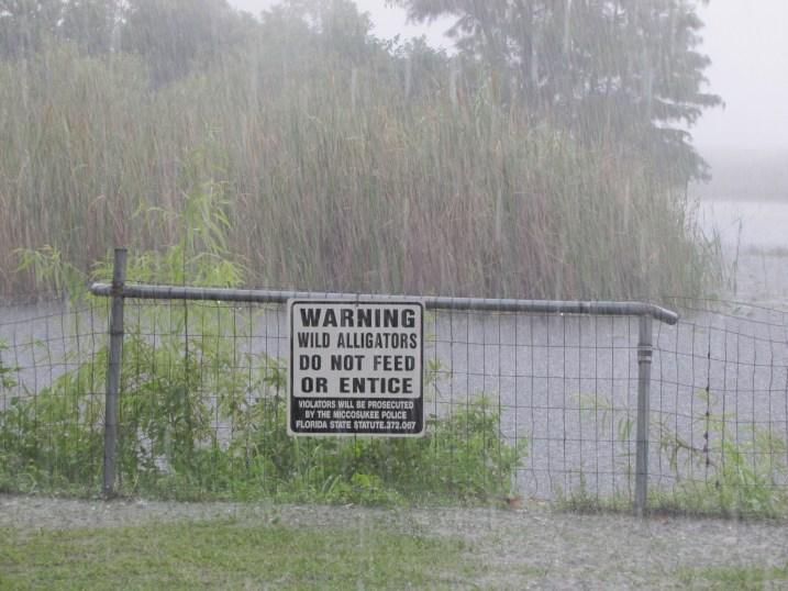 Rainy Everglades
