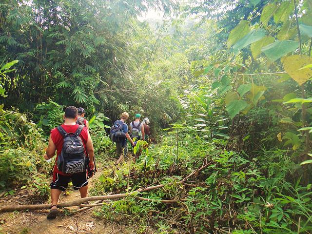 Malaysian jungle
